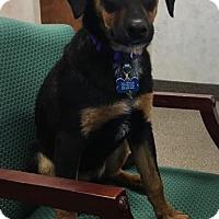 Adopt A Pet :: Winnie - Akron, OH