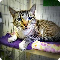 Adopt A Pet :: Leonie - Casa Grande, AZ