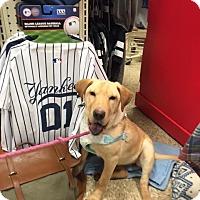 Adopt A Pet :: Gretal - Poughkeepsie, NY