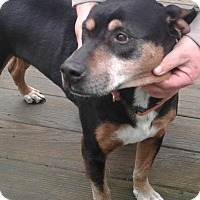Adopt A Pet :: BAXTER - bath, ME