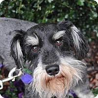 Adopt A Pet :: Trevor - Atlanta, GA