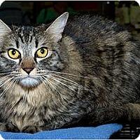 Adopt A Pet :: Tavi - Sacramento, CA