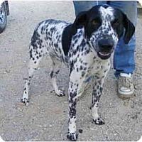 Adopt A Pet :: Parker - Gonzales, TX