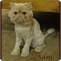 Adopt A Pet :: Sam - Beverly Hills, CA