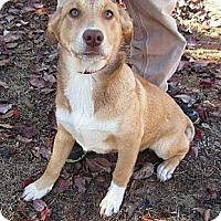 Adopt A Pet :: Galina~ Adopted! - Carthage, MS