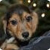 Adopt A Pet :: Baby Palmer - Marlton, NJ