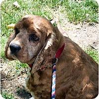 Adopt A Pet :: Kristen - Menomonee Falls, WI