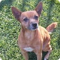 Adopt A Pet :: Albert - Justin, TX
