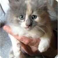 Adopt A Pet :: Cupcake - Dallas, TX