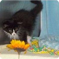 Adopt A Pet :: Niko - McDonough, GA
