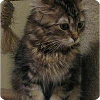 Adopt A Pet :: Bitsy - Davis, CA