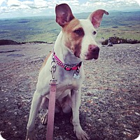 Adopt A Pet :: ZOE BUNNY shy & sweet - Durham, NH