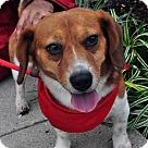 Adopt A Pet :: Garp