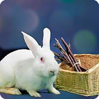 Adopt A Pet :: Vance - Marietta, GA