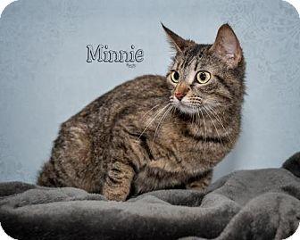 Domestic Mediumhair Cat for adoption in Fort Mill, South Carolina - Minnie 5389
