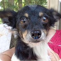 Adopt A Pet :: Foxie - Crump, TN