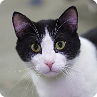 Adopt A Pet :: Monte - Sioux Falls, SD