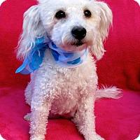 Adopt A Pet :: Mrs. C - Irvine, CA