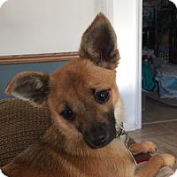 Adopt A Pet :: Sancho - Beavercreek, OH