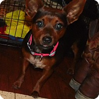 Adopt A Pet :: Robin - mooresville, IN