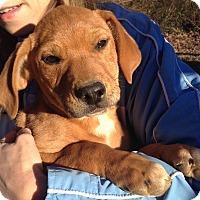 Adopt A Pet :: Willow (10 lb) - SUSSEX, NJ