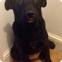 Adopt A Pet :: Ramona - Waldorf, MD