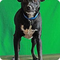 Adopt A Pet :: Oryan - Waldorf, MD