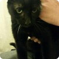 Adopt A Pet :: Serenghetti - McHenry, IL