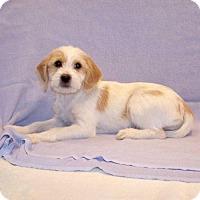 Adopt A Pet :: 16-d05-012 Elissa - Fayetteville, TN