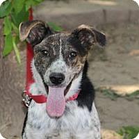 Adopt A Pet :: Tessa - Avon, NY