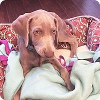Adopt A Pet :: Bubba - Rolling Hills Estates, CA