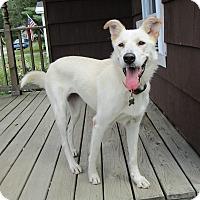Adopt A Pet :: Meeka - Adopted! - Ascutney, VT