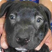 Adopt A Pet :: SKEETER - Ukiah, CA