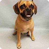 Adopt A Pet :: Stellen/Ralphie - Manhattan, NY