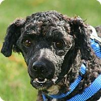Adopt A Pet :: Ebony - carlsbad, CA
