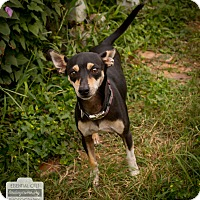 Adopt A Pet :: Ryder - Leander, TX