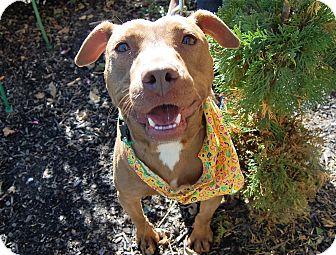 Labrador Retriever Mix Dog for adoption in Wilmington, Delaware - Lucas