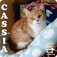 Adopt A Pet :: Cassia - Carencro, LA