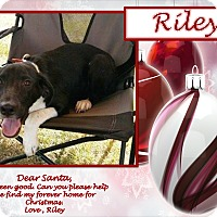 Labrador Retriever/Hound (Unknown Type) Mix Puppy for adoption in Ringwood, New Jersey - Riley