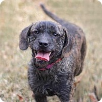 Adopt A Pet :: MISS GENTRY - Andover, CT