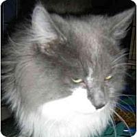Adopt A Pet :: Eli - Strathmore, AB