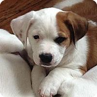 Adopt A Pet :: Ebenezer - Wilmette, IL