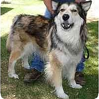 Adopt A Pet :: Kody - Gilbert, AZ