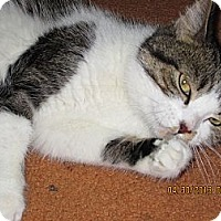 Adopt A Pet :: Betsy - Jeffersonville, IN