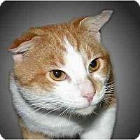 Adopt A Pet :: Butch - Montgomery, IL