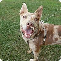 Adopt A Pet :: Hero - Spring City, TN