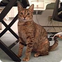 Adopt A Pet :: Gracie - Long Beach, NY