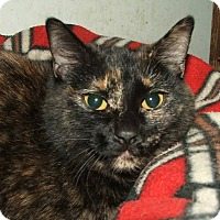 Adopt A Pet :: Whispering Willow - Muskegon, MI