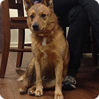 Adopt A Pet :: Cooper - Lake Odessa, MI