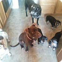 Adopt A Pet :: Gumby - Kimberton, PA